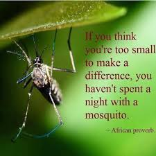 African Proverb Mosquito