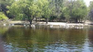 River Thamalakane, Maun Botswana Phot credits - Juliet Kego Ume-Onyido